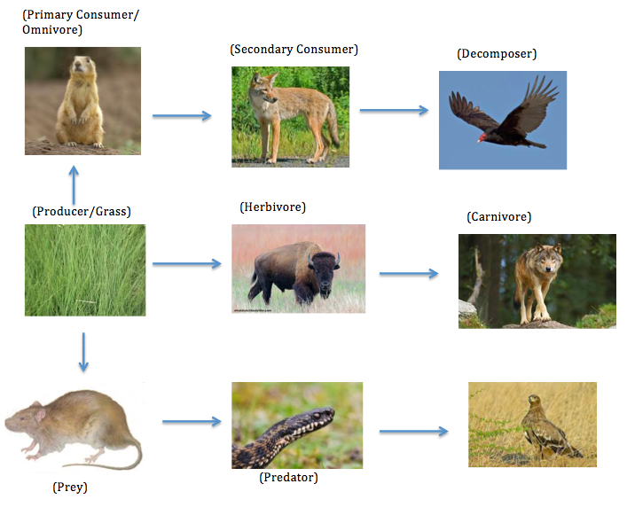 Food Web For Temperate Grassland Biome